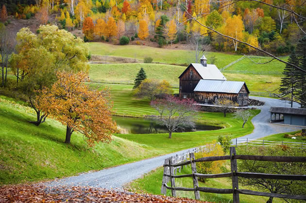 Foliage and a cottage in New England during the fall.