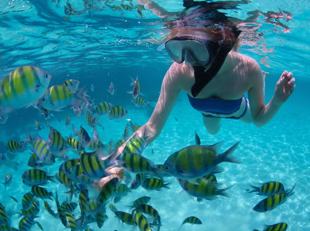 A snorkeler swims with a group of fish near Maui.