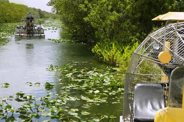 An airboat trekking through waterlilies in the Florida Keys.