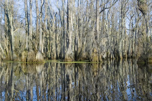 A view of the bayou outside of New Orleans during the winter.