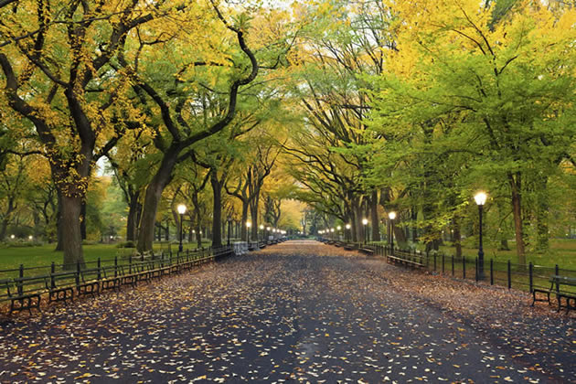 A row of trees in Central Park at dusk.