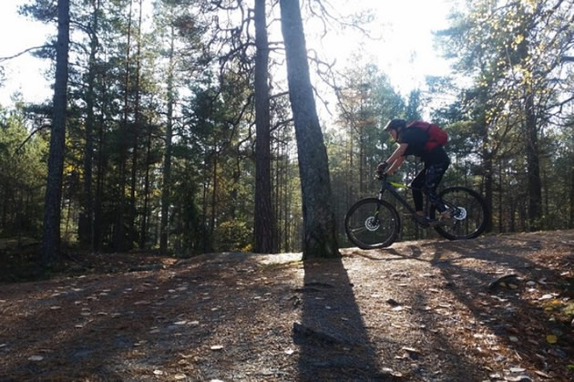 A cyclist explores a forest in Sweden.