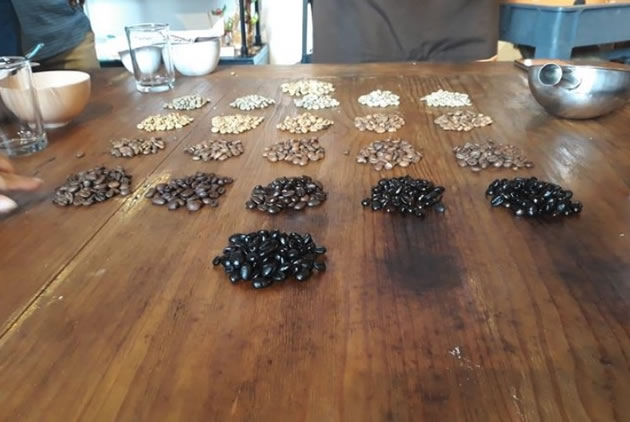 Various groups of coffee beans laid out on a table in Veracruz.