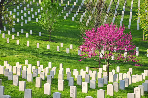 Trees and headstones at Arlington National Cemetery in Washington, D.C.