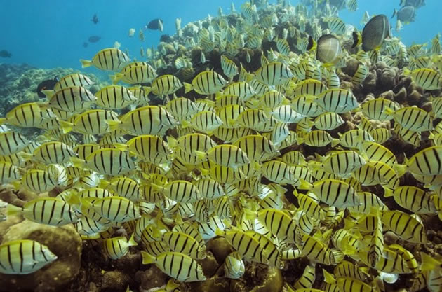 A school of tropical fish in Cabo San Lucas.