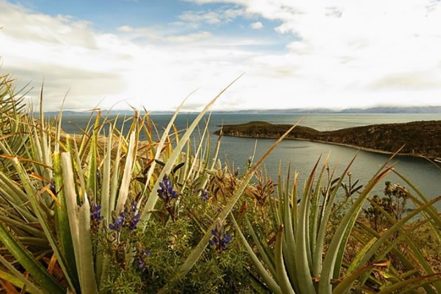 Wildflowers grace the banks of Lake Titicaca.