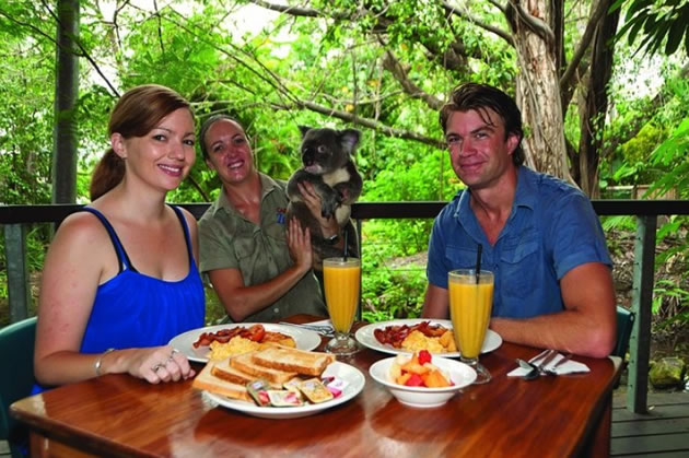 Diners enjoy juice, toast and fruit as a koala and keeper look on.