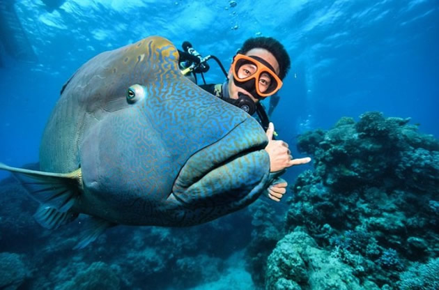 Scuba enthusiast poses with a big fish along the Great Barrier Reef.